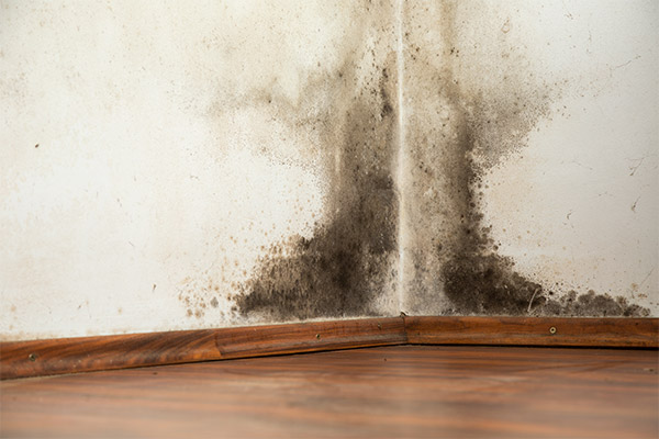 mold removal snoqualmie pass, mold removal services snoqualmie pass, professional mold removal services snoqualmie pass